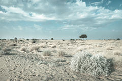 One rhejri tree in desert undet blue sky Stock Photography