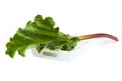 One Rhubarb stick Stock Photo