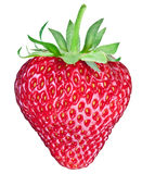 One rich strawberry fruit. Clipping paths. Royalty Free Stock Image