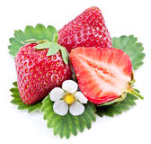 One rich strawberry fruit isolated on a white. Royalty Free Stock Images