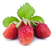 One rich strawberry fruit isolated on a white. Stock Photos