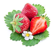 One rich strawberry fruit isolated on a white. Stock Image