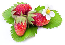 One rich strawberry fruit isolated on a white. Stock Photography