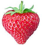 One rich strawberry fruit. Royalty Free Stock Image