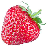One rich strawberry fruit. Stock Image