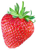 One rich strawberry fruit. Royalty Free Stock Photography