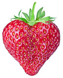 One rich strawberry fruit. Stock Images