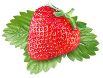 One rich strawberry fruit with leaves. Stock Photo