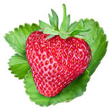 One rich strawberry fruit. Work paths. Royalty Free Stock Photography