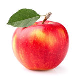 One ripe apple Stock Photography