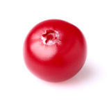 One ripe cranberry in closeup Stock Photography