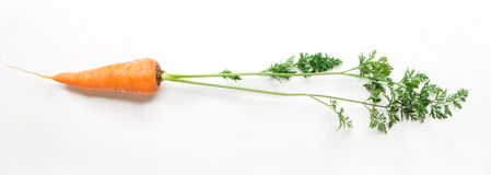 One ripe fresh carrot isolated on white background Stock Photos
