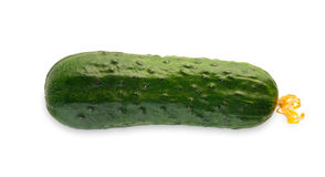 One ripe fresh green cucumber isolated on white background Royalty Free Stock Photo