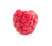 One ripe fresh raspberry Stock Photography