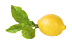 One ripe lemon isolated Stock Images