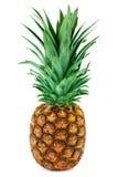 One ripe pineapple royalty free stock photos