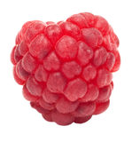 One ripe raspberry Royalty Free Stock Image
