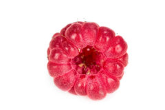 One ripe raspberry Royalty Free Stock Images