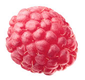 One ripe raspberry Royalty Free Stock Photo