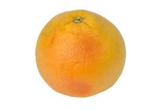 One ripe red grapefruit Stock Image