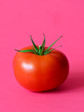 One ripe tomato. On a pink background Royalty Free Stock Image