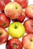 One ripe yellow apple with red apples Stock Photo