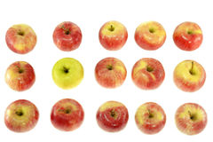 One ripe yellow apple with red apples Royalty Free Stock Photos