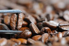 Roasted coffee beans macro Stock Image
