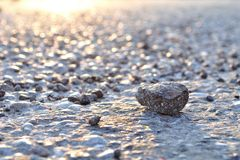 One rock on asphalt Stock Photography