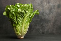 One romaine salad. On a black background. Copy space Stock Photography