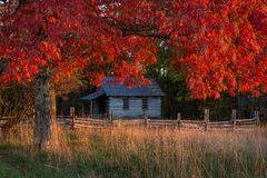 One room school, autumn reds, cumberland gap national park. An old one room schoolhouse framed by peak autumn foliage in the Cumberland Gap National Park Stock Photo