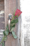 One rose flower with shadow is inserted in door brass handle. With old wood door Stock Image