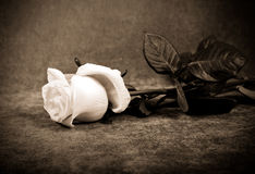 One rose, imitation old photo Royalty Free Stock Images