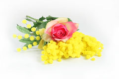 Rose and mimosa Stock Photos