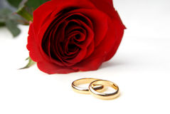 One rose and two wedding rings Royalty Free Stock Photo
