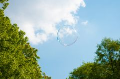 One round soap bubble on the blue sky, with trees in the background stock photo