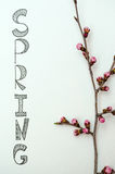 One sakura branch with flower buds on white paper with lettering Spring Royalty Free Stock Images