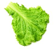 One salad leaf isolated on a white background royalty free stock images