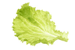 One salad leaf on white Stock Images