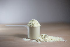 One scoop of whey protein Royalty Free Stock Image