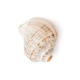 One  sea shell Royalty Free Stock Photos