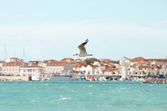 One seagull flying above the wavy sea in Vodice, Croatia stock photo