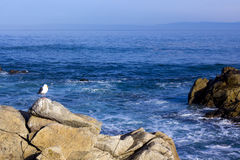 One seagull on a rock, 17 Mile Drive Stock Image