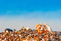 One seashell on a pebble beach on sea background Royalty Free Stock Images