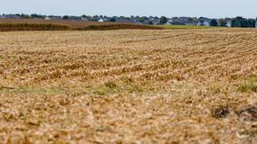 One section of this field has been harvested Stock Photography