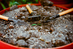 One seedling in the ground, poured around the garden accessories. Little green sprout in the ground in drops of water around a shovel, a rake Stock Photo