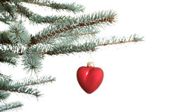 One separate christmas ball hanging on a fir. Royalty Free Stock Photos