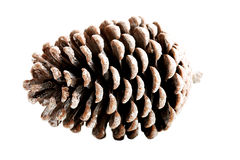 One separate cone. Stock Photos