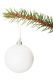 One separated christmas ball handing on a fir. Stock Photos