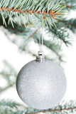 One separated christmas ball handing on a twig. Stock Image